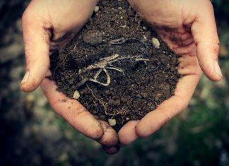 Tarım Dünyası platformu
