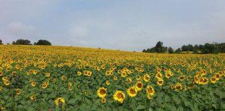 Bitkisel üretim tahminleri ne kadar gerçekçi?