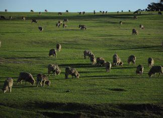Avustralya'dan tarım ve hayvancılık izlenimlerim