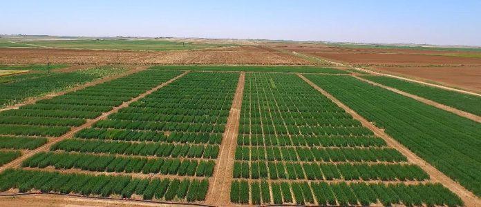 Tarımsal kalkınma için 10 yıllık planlama