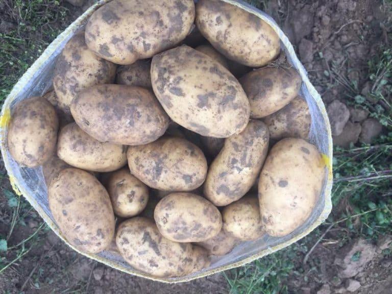"""Bakan Pakdemirli: """"Soğan,patates ithal etmemek için ihracat izne bağlandı"""""""