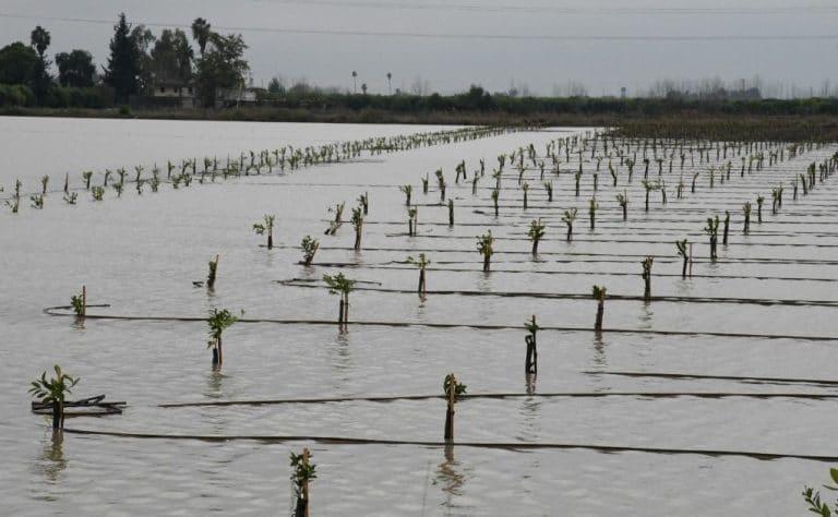 Tarım kredilerinin yapılandırılması, ertelenmesi