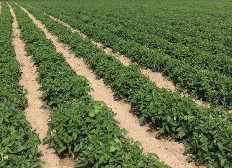 TÜSİAD'tan tarıma bütüncül politika önerisi