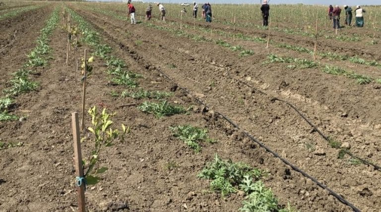 Gıdamızı üreten çiftçileri de ayakta alkışlamalıyız