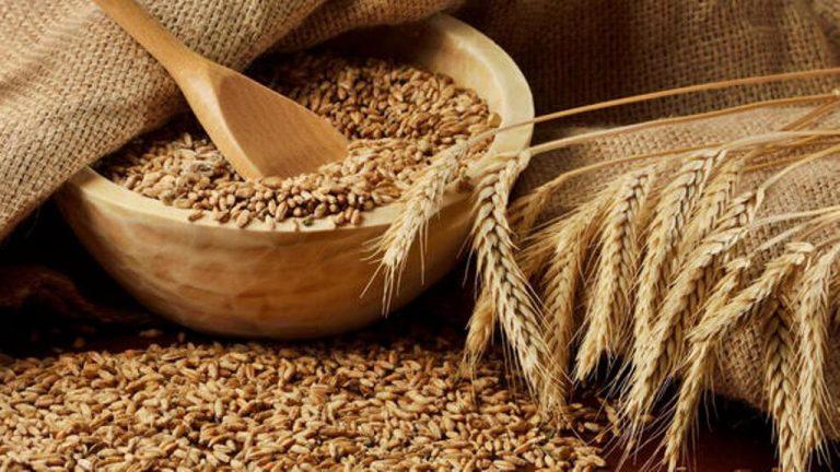 Tarımda kısıtlamalar gıda güvenliğini tehdit ediyor