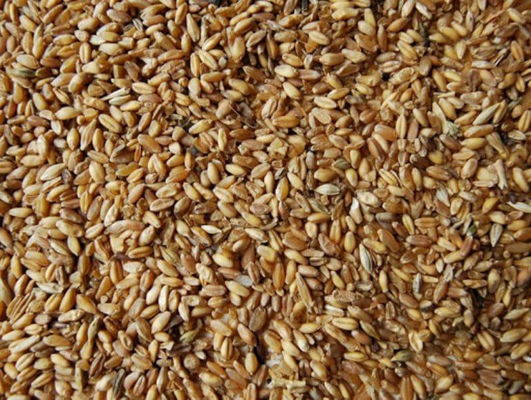 Buğday fiyatı açıklanıyor